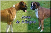 C-Wurf nach Alegro & Jona von Seeben Wurftag: 11.09.2012 Zuchtbuchnummer: 3144-c1